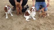 社会化のコース(犬の保育園)